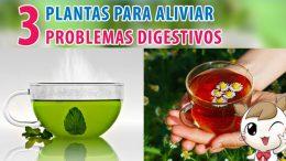 3 plantas para aliviar problemas digestivos